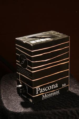 Pascona BiB.jpg